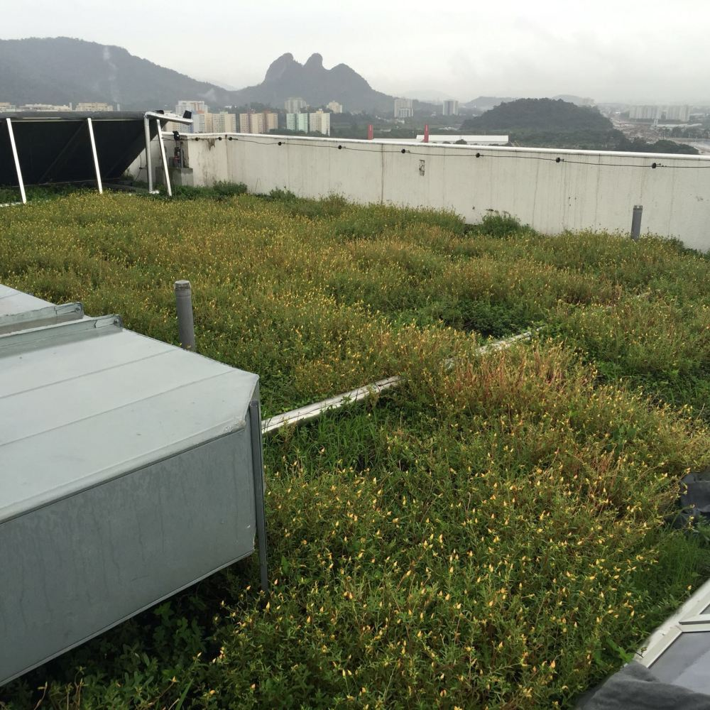Cobertura verde extensiva em formação sobre os condomínios da vila dos atletas - Jogos Olímpicos Rio 2016.
