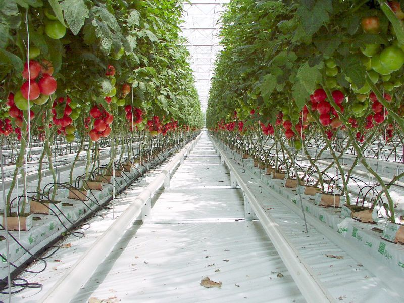 6070030_how-vertical-farming-is-revolutionizing_t36257682