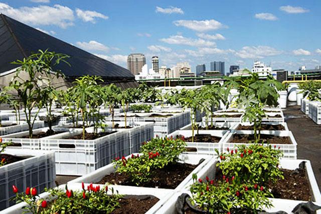 Produção de hortaliças no telhado do Shopping Eldorado em São Paulo.