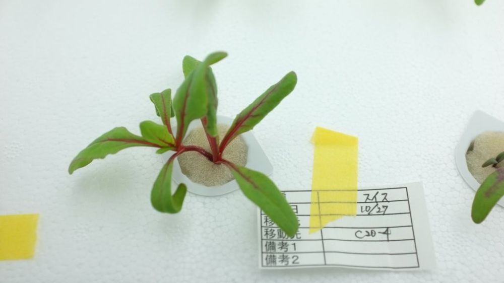 toshiba-clean-room-small-plant-marker