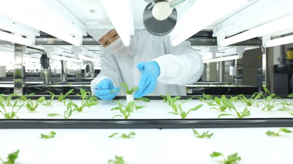 toshiba-farm-worker-checks-plant