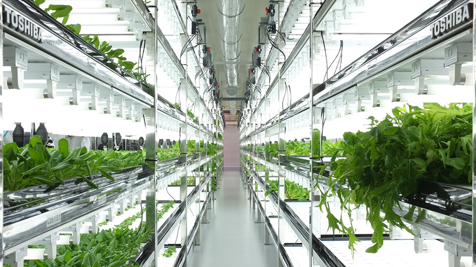 Toshiba-Hydroponic-Systems-Photo-by-Dan-Frommer-of-Quartz-1